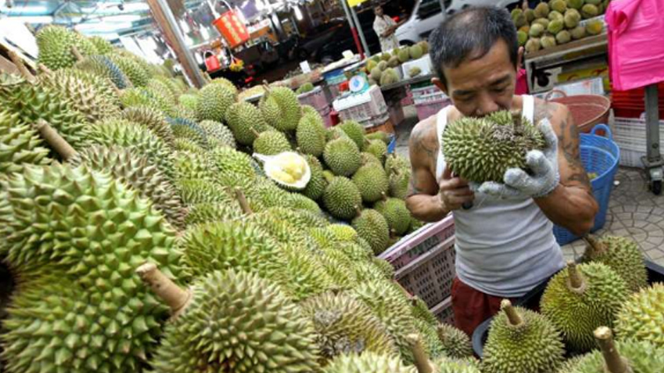 Five Myths about Durians